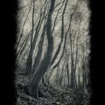 Forest-between-worlds